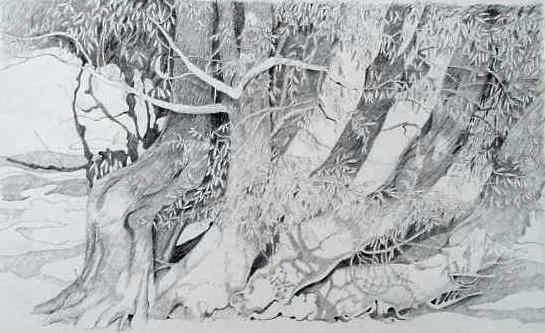 Prof. Winfried Jansen: Bäume